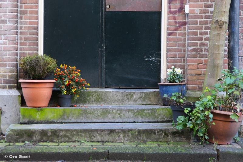 מדרגות עם עציצים - אמסטרדם המלצות - אמסטרדם בחורף