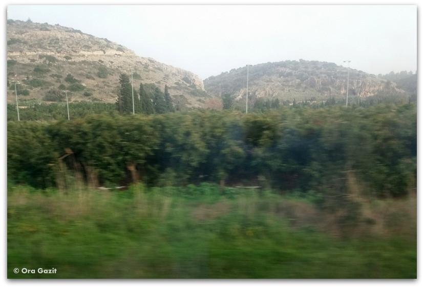 נוף מהחלון ברכבת - בדרך לתל אביב