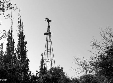שביל חיפה   מקטע 6: נווה שאנן