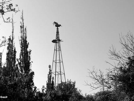 שביל חיפה | מקטע 6: נווה שאנן
