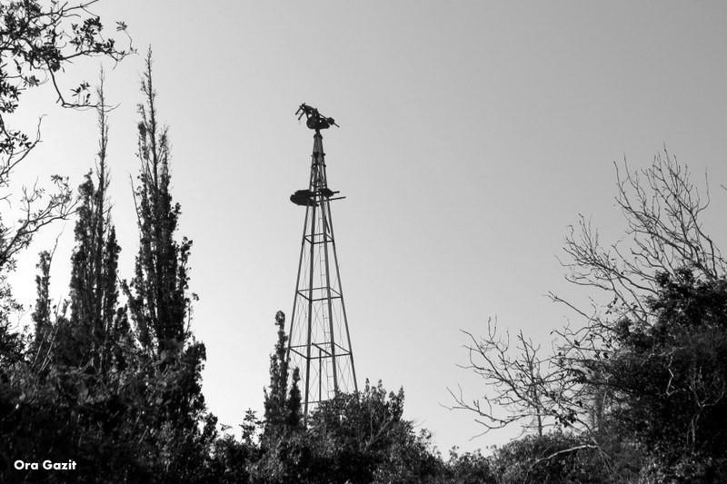 גבעת השבשבת - נווה שאנן - שביל חיפה - טרק - טיול בחיפה