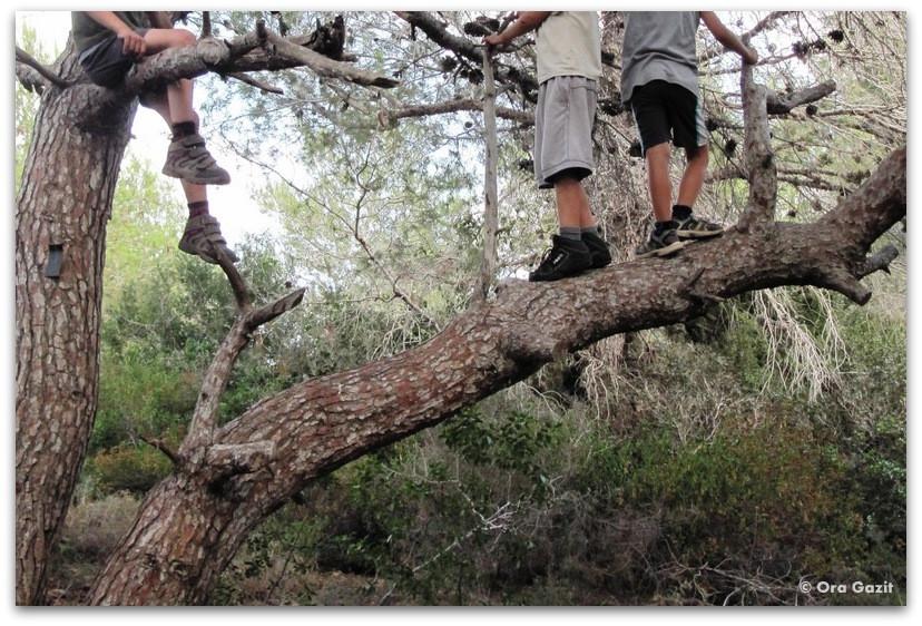 ילדים מטפסים על עץ - המלצה על ספר - שורשים