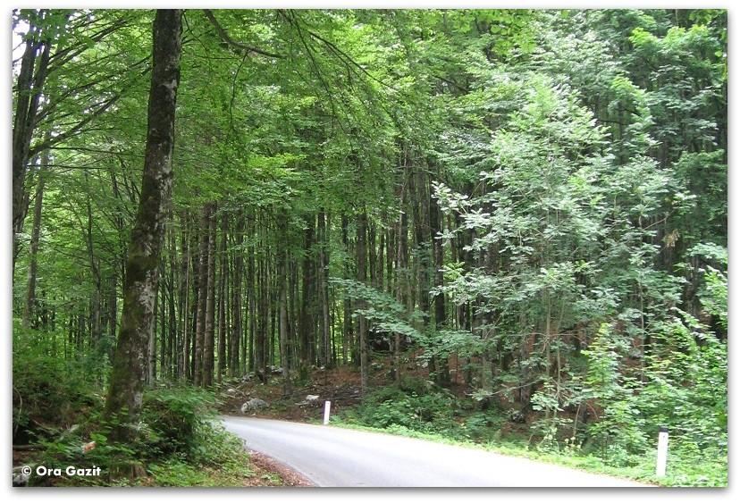 דרך בער, סלובניה