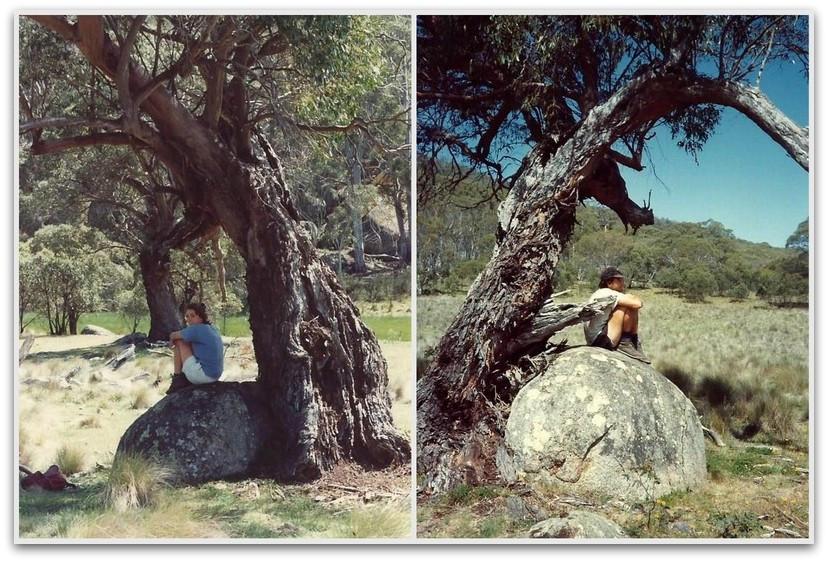 יושבים בצל העץ - טרק - טיול לאוסטרליה