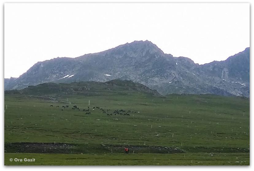 עדר סוסים - שבעת האגמים - טרק הרי רילה בולגריה - יומן מסע