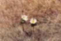 פרחים, אוסטרליה - ומ מסע - טיול אחרי צבא