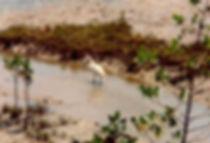 עוף מים, אוסטרליה - יומן מסע - טיול אחרי צבא