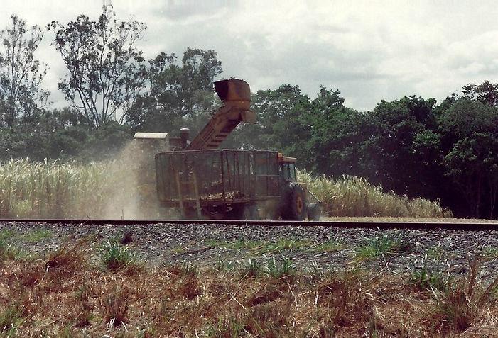 קציר קני סוכר, אוסטרליה - יומן מסע - טיול אחרי צבא