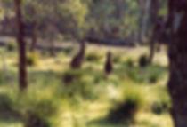 קנגורו, אוסטרליה - יומן מסע - טיול אחרי צבא