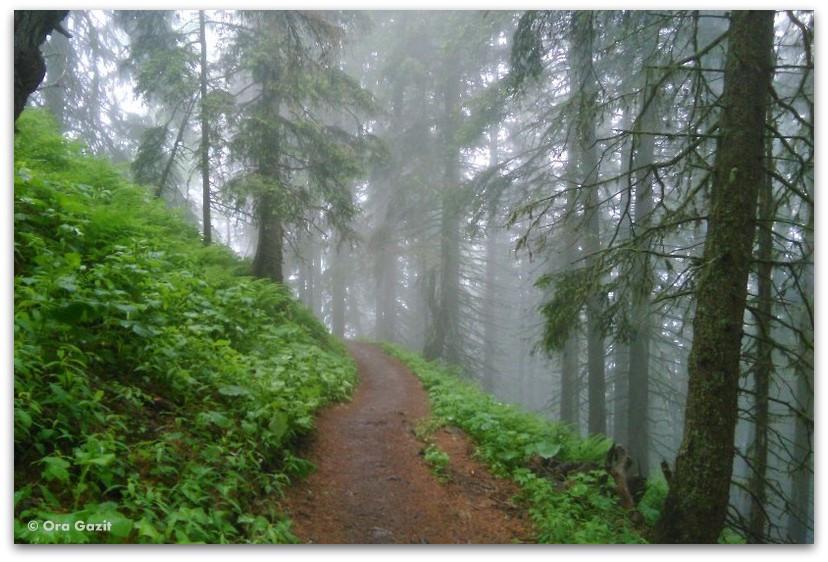 דרך ביער - טרק - סובב מון בלאן - יומן מסע