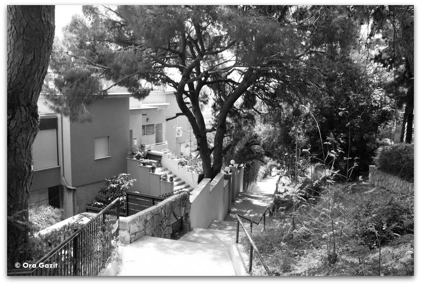 מדרגות ובתים - מה לעשות בחיפה - מסלול 1000 המדרגות