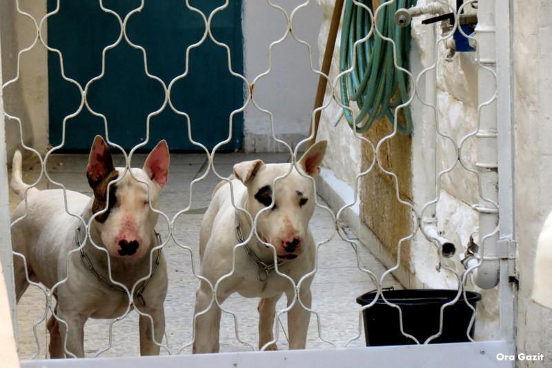 זוג כלבים - שביל חיפה - טרק - טיול בחיפה