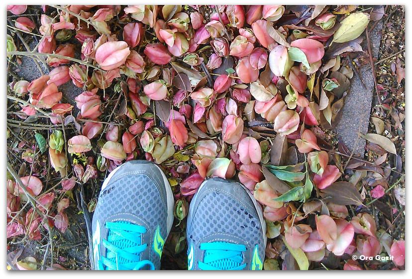 עלי שלכת - הליכה לירידה במשקל - איך להתחיל לעשות ספורט