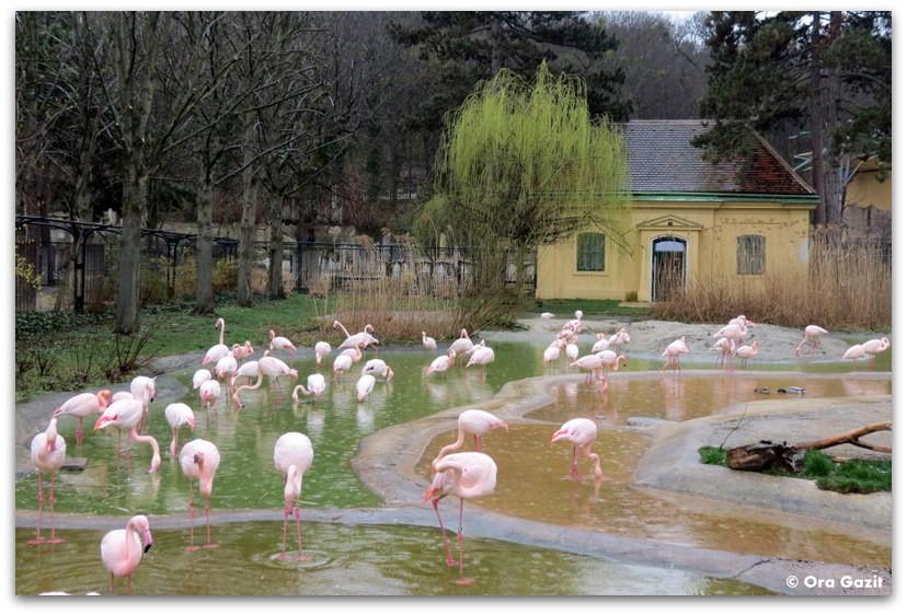 גן חיות - וינה