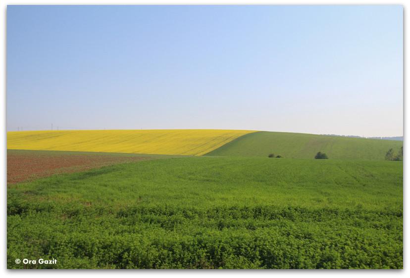שדה פורח - סלובקיה