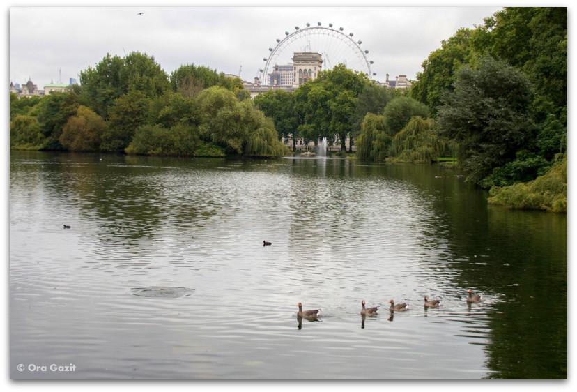 אגם עם ברווזים - פארקים בלונדון