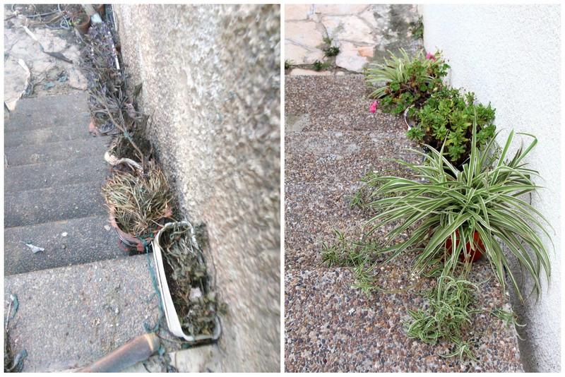 עציצים ירוקים ועציצים שרופים - שריפה בחיפה
