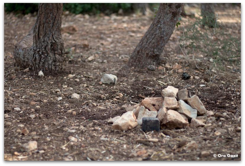 ערמת אבנים - שומרי הגן - המלצה על ספר - שורשים