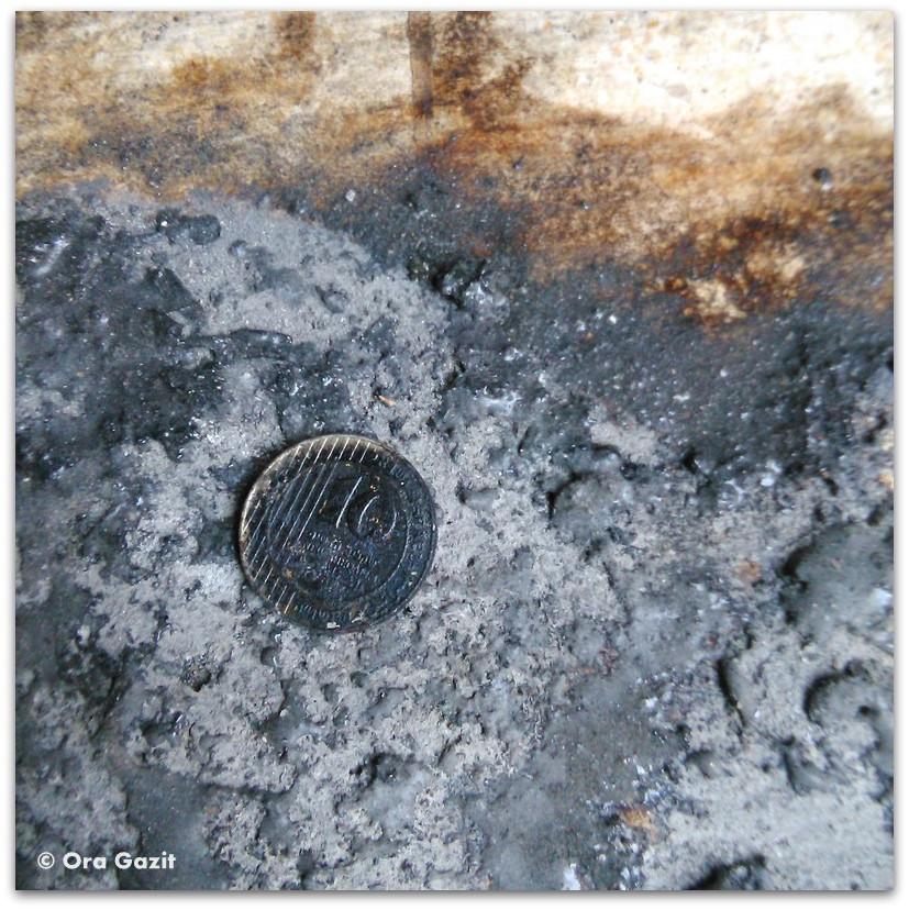 מטבע מפוחם - שריפה בחיפה - היער השחור