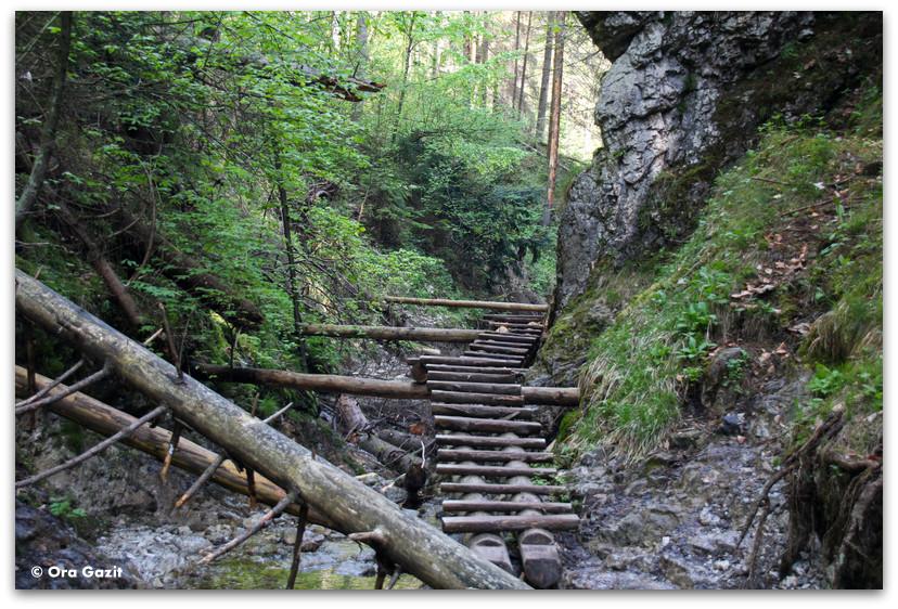גשרון עץ - סוחה בלה - טרק - גן העדן הסלובקי