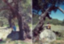 יושבים בצל העץ - אוסטרליה - יומן מסע - טיול אחרי צבא