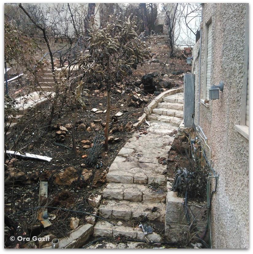 גינה שריפה - שריפה בחיפה - היער השחור