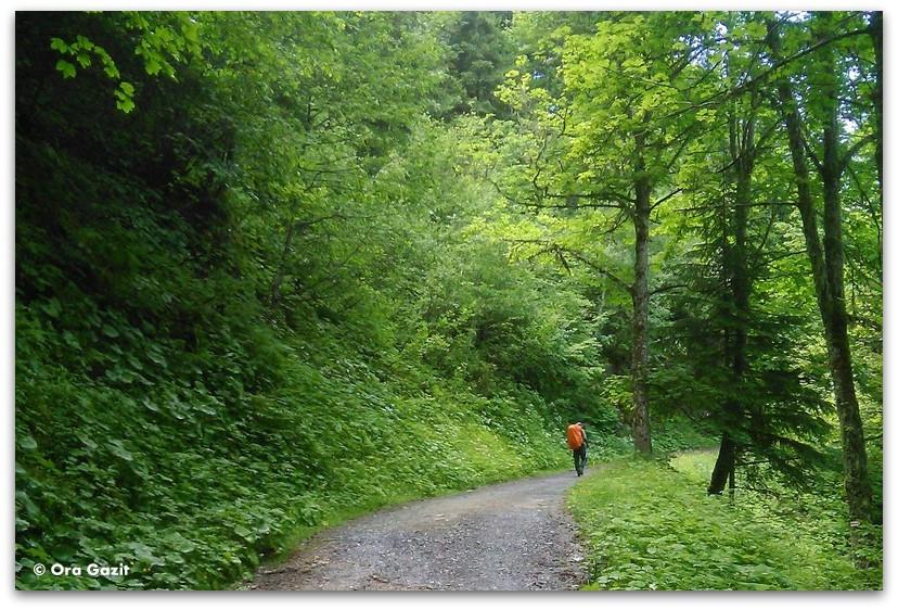 שביל ביער - טרק - סובב מון בלאן