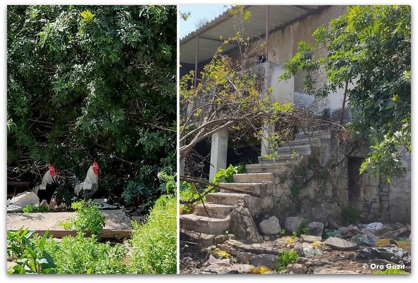 מדרגות ותרנגולים - שכונת חליסה - שמות רחובות בחיפה - טיול בחיפה