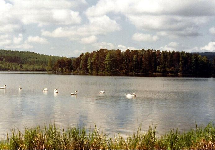 ברבורים באגם, שבדיה - יומן מסע - טיול אחרי צבא