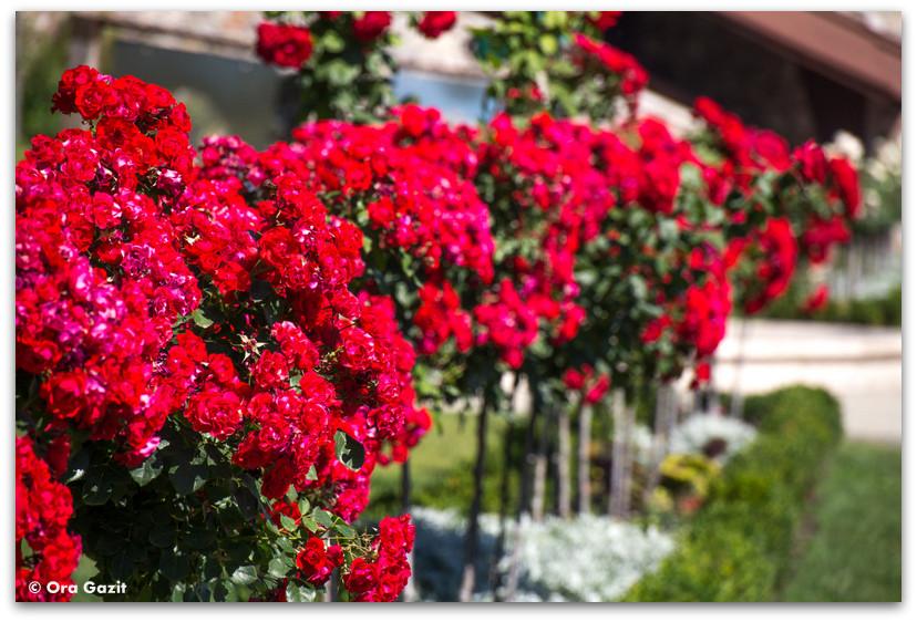 פרחים אדומים - טיול בבודפשט - הונגריה