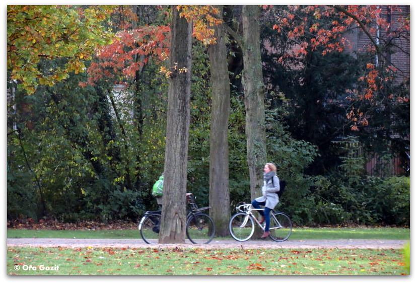 אשה על אופניים בפארק, שלכת, אמסטרדם