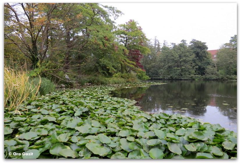 אגם בגנים הבוטניים - פארק - קופנהגן