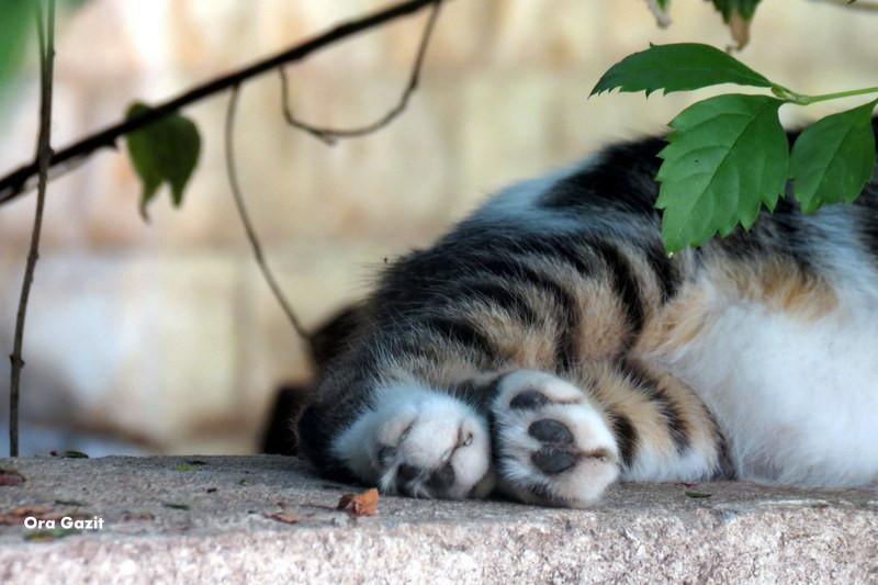 חתול - הדר - שביל חיפה - טרק - טיול בחיפה