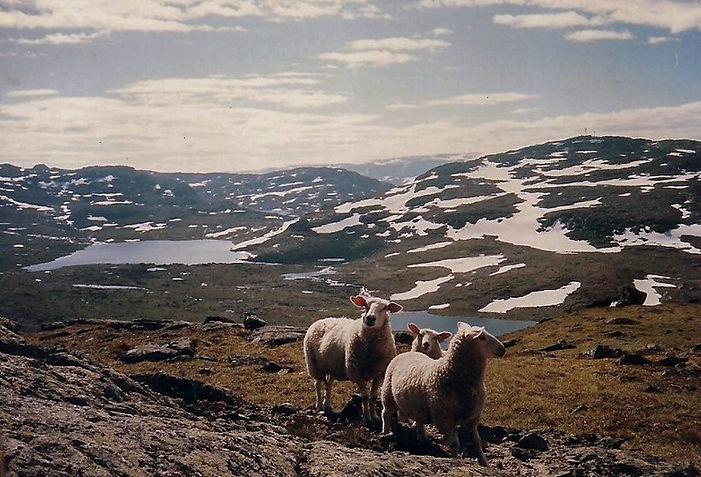 כבשים, נורבגיה - יומן מסע - טיול אחרי צבא