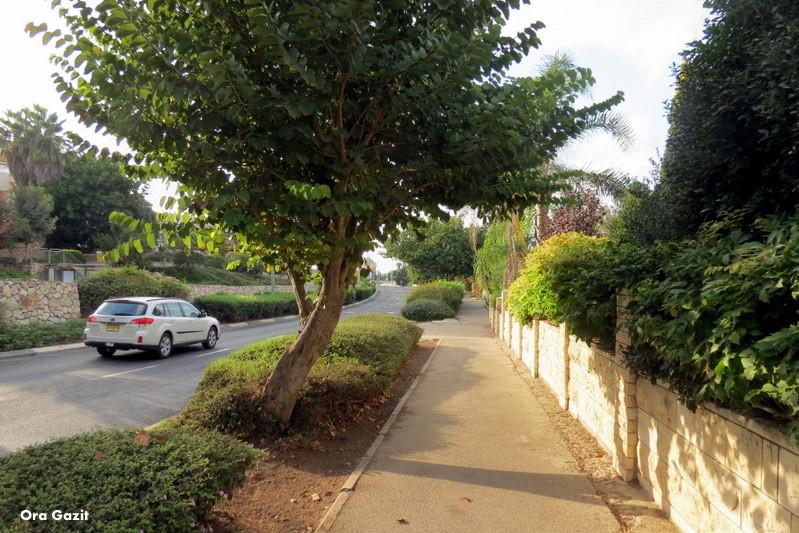 רחוב - שביל חיפה - טרק - טיול בחיפה