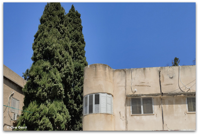 באוהאוס בחיפה - רחובות בקרית אליעזר - שמות רחובות בחיפה - טיול בחיפה