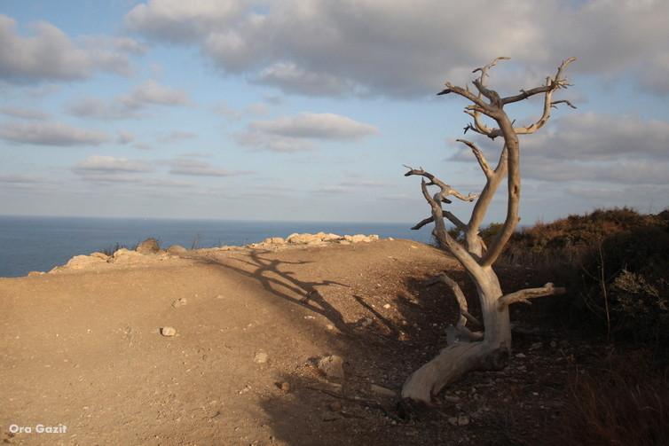 עץ יבש - שביל חיפה - טרק - טיול בחיפה