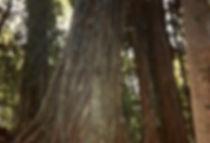 יער גשם, אוסטרליה - יומן מסע - טיול אחרי צבא