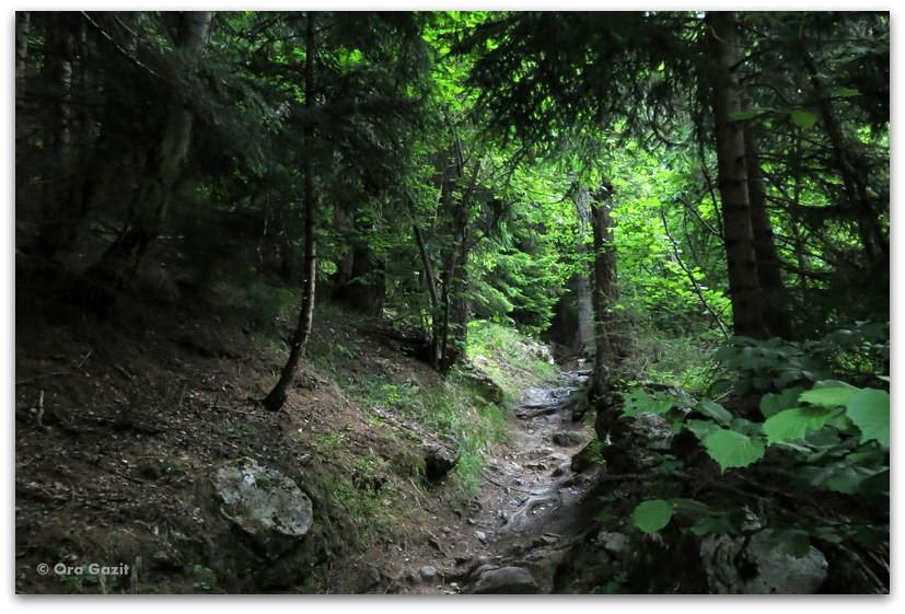 יער - טרק - סובב מון בלאן - יומן מסע