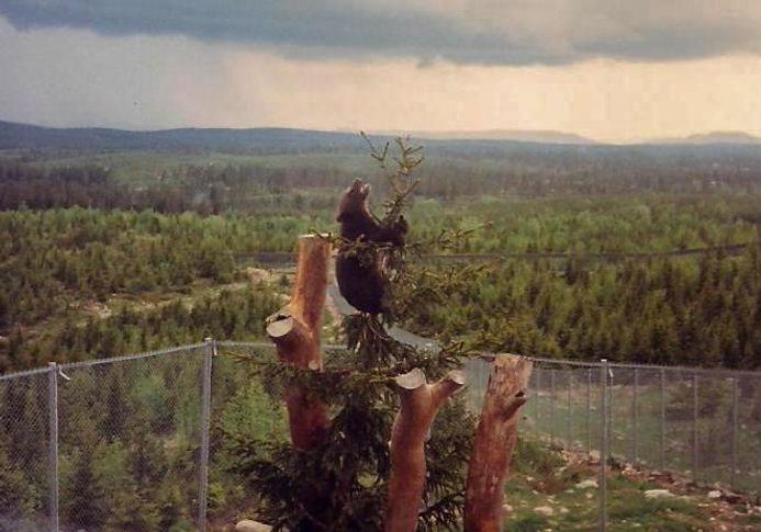 דוב, שבדיה - יומן מסע - טיול אחרי צבא