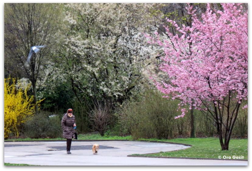 אשה עם כלב - פארק - וינה