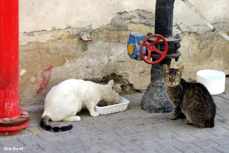 חתולי רחוב - שביל חיפה - טרק - טיול בחיפה