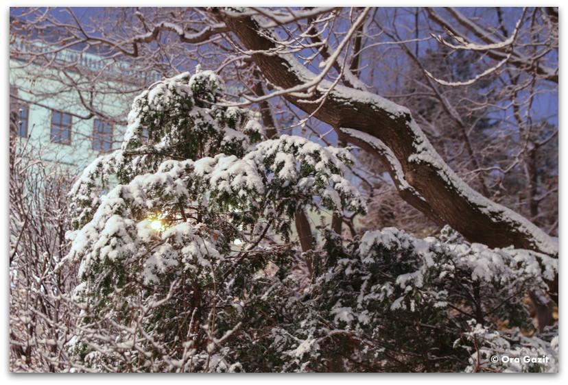 שלג - טיול בוינה - מה לעשות בוינה - וינה בשלושה ימים