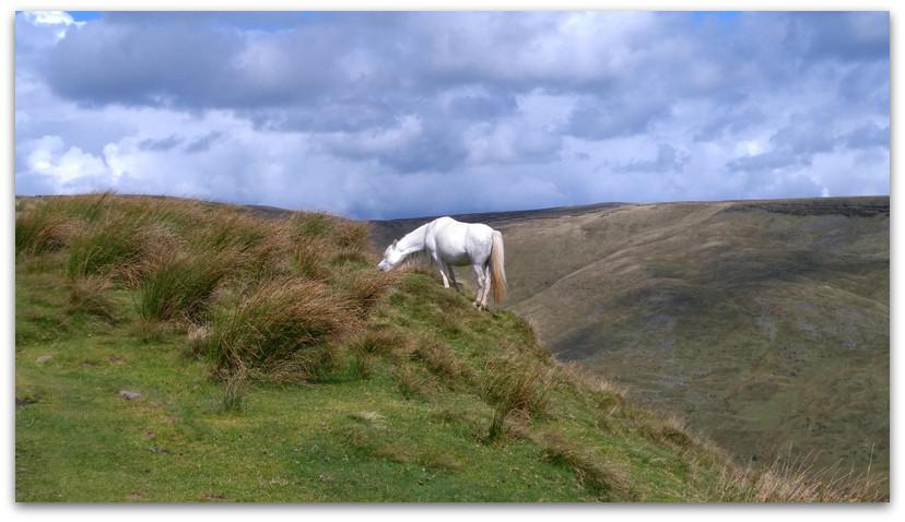 סוס לבן באחו - טרק - וולס