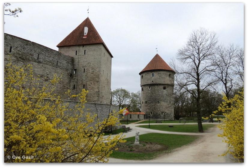 מגדלים בחומות העיר העתיקה - - טאלין, אסטוניה