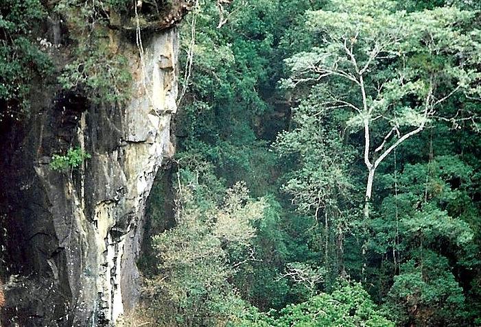 יער, אוסטרליה - יומן מסע - טיול אחרי צבא