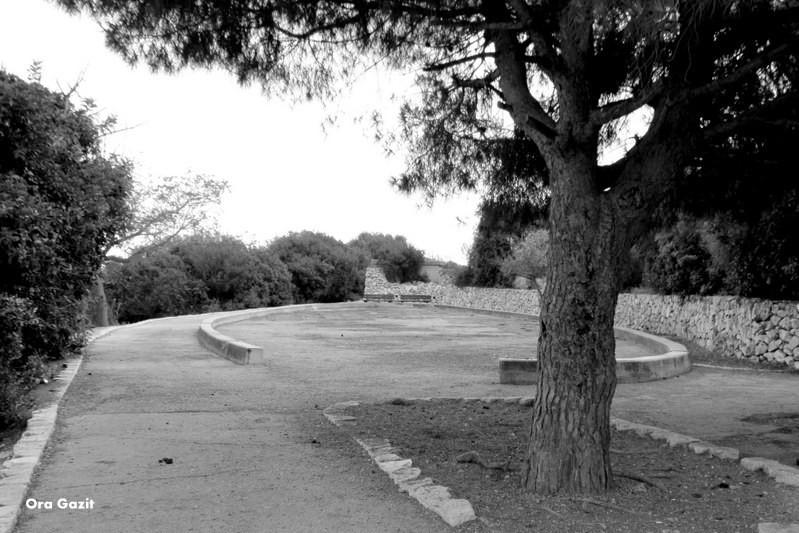 הגבעה - שביל חיפה - טרק - טיול בחיפה