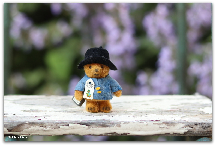 הדוב פדינגטון - מזכרות מטיולים - מה להביא מזכרת