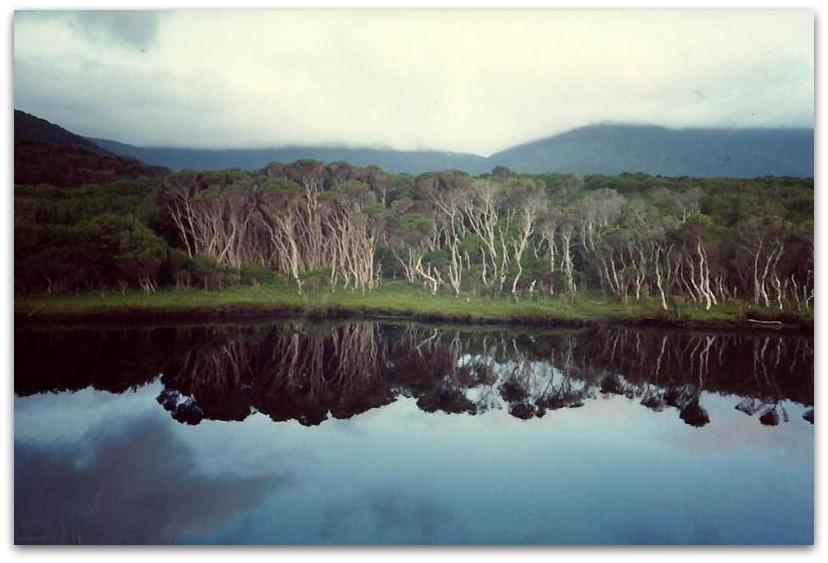 השתקפות עצים במים - טרק - אוסטרליה
