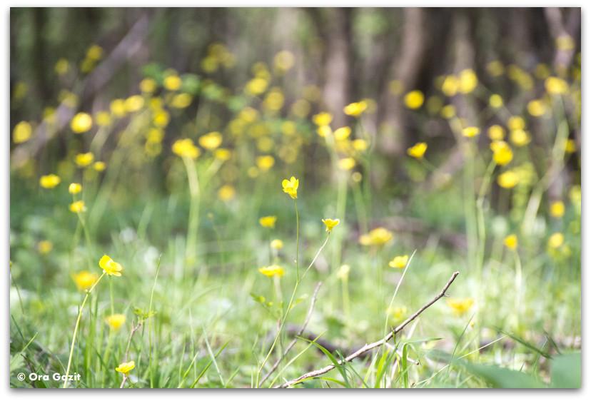 פרחים צהובים - בולגריה - טיול עם ילדים בחול
